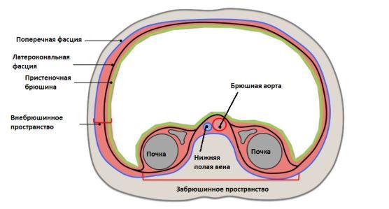 Анатомическая схема